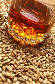 picture of malt  - Tumbler glass with whiskey standing on barley malt grains - JPG