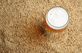pic of malt  - Glass full of light beer standing on barley malt grains - JPG