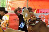 Bulls Feeding at Madura Bull Race, Indonesia
