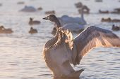 Swan Lake Winter Birds