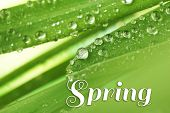 Water drops on fresh green leaves, close-up. Hello Spring concept
