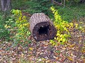 image of hollow log  - hollow log on the ground in the autumn - JPG