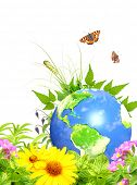 picture of summer insects  - Summer green leaves - JPG
