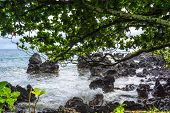 picture of vegetation  - View of the rocks and vegetation on the Maui coast - JPG