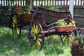 picture of wagon wheel  - Vintage style horse wagon - JPG