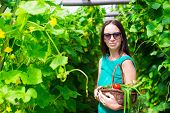 foto of greenery  - young woman holding a basket of greenery and onion in greenhouse - JPG