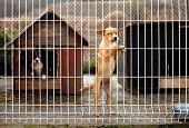foto of sad dog  - Lonly abandoned puppy leaning on a fence of a enclosure in a dog shelter - JPG