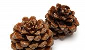 stock photo of pinus  - cone of stone pine Pinus pinea with some of the nuts still in isolated on white background - JPG