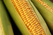 picture of corn cob close-up  - close up view of corn cob as background - JPG