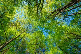 stock photo of nature conservation  - Spring Summer Sun Shining Through Canopy Of Tall Trees - JPG
