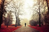 Постер, плакат: Autumn Foggy Alley Mysterious Autumn Landscape