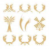 Conjunto de elementos de diseño con trigo, vector