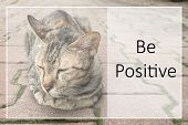 Inspirational Motivational Quote On Brown Cat  Background poster