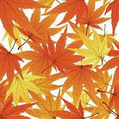 Maple seamless foliage. For easy making seamless pattern just drag all group into swatches bar, and use it for filling any contours.