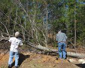 Chopping The Tree