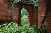 Brick Window And Ferns