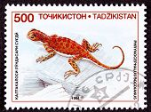 Canceled Tajikistan Postage Stamp Spotted Toadhead Agama Lizard Phrynocephalus Sogdianus