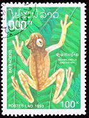 Canceled Laotian Postage Stamp Brown Frog Hyalinobatrachium Vireovittatum Hanging Fern