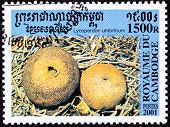 Canceled Cambodian Postage Stamp Round Umber-brown Puffball Mushroom Lycoperdon Umbrinum