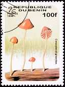 Canceled Benin Postage Stamp Umbrella Shaped Psychedelic Mushroom, Conocybe Siligineoides