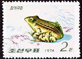 Canceled North Korean Postage Stamp Black Spotted Frog Pelophylax Nigromaculatus