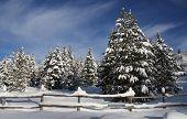 Winter Skys