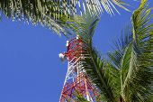 Red And White Communication Tower In Palm Trees. Radio Mast On Tropical Island. Electric Supply In S poster