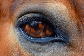 Eye Of Horse, Fire In Eye. A View Of The Horse`s Eye. Reflection Of Fire In The Eye Of A Horse. poster