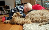 stock photo of heartwarming  - A heartwarming and peaceful image of a boy snuggled up with his Airedale Terrier - JPG