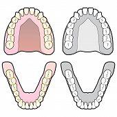 Dentes humanos