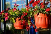 An Outside Baskets Filled With Vibrant Colorful Ornamental Flowers, Plants, In A Warm Summer Day Clo poster