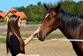 stock photo of fondling  - Long haired young woman fondling a brown horse at a horse farm - JPG