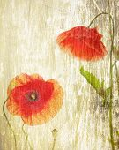 red poppies on a grunge wood background