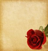 stock photo of rosa  - old paper texture with dark red rose - JPG