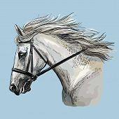 Colorful White Horse Portrait With Bridle. Horse Head With Long Mane In Profile Isolated On Blue Bac poster