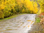 Fall rain on rural dirt road thru yellow willows