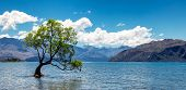 Panoramic Image Of The Lonely Tree In Lake In Wanaka, New Zealand poster