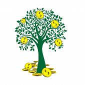 money tree isolated on White background.