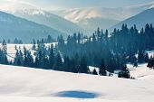 Mountainous Landscape In Wintertime. Gorgeous Scenery On A Bright Sunny Day. Spruce Forest On Snow C poster
