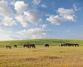 picture of horses eating  - Group of horses eating grass on pasture in summer day - JPG
