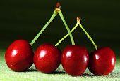 scene emphasizing ecological farming cherries