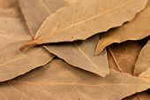 Bay Leaves Close-up. Scattered Dry Bay Leaves. poster