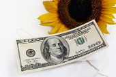 0 Bill And A Yellow Sunflower