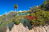 A cliff of sandstone along Laguna Beach California shows blooming, vibrant flowers growing down the basin