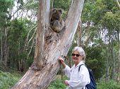 Koala Lady