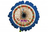Gerbera Daisy Flower In Colors Flag Of American State Of Virginia   On White Background As Concept A