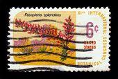 Planta Ocotillo - Fouquieria Splendens del desierto