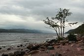 Tree on the waterfront of the Loch Ness by a stormy day