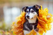 Portrait Of A Dog In Yellow Autumn Leaves.