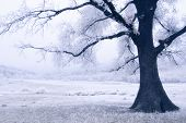 Tree on a frozen meadow with snow